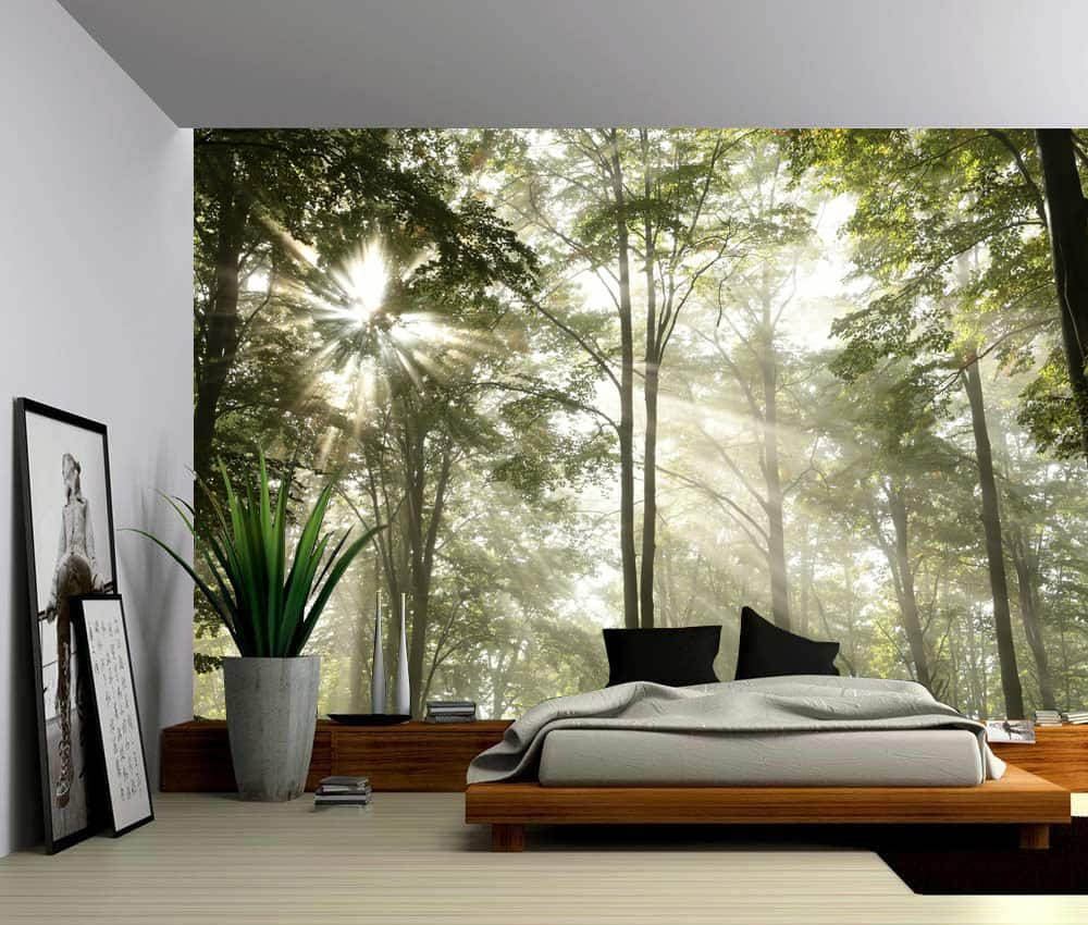 Wall Murals Product : Morning sunlight trees wall mural picture sensations
