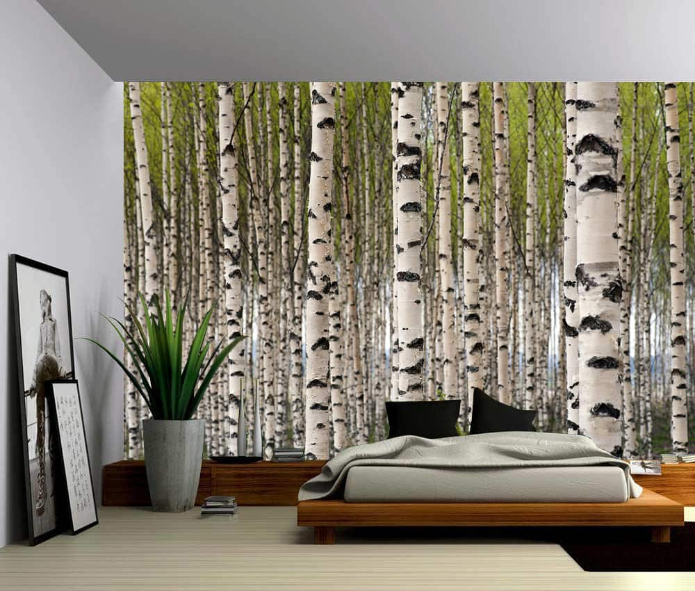 Landscape Birch Forest Self Adhesive Vinyl Wallpaper Peel