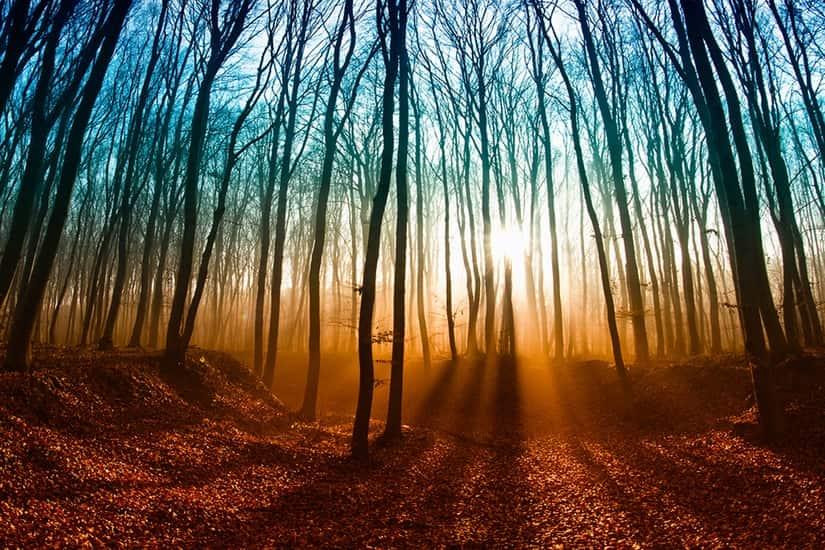 Landscape Autumn Magical Forest Self Adhesive Vinyl