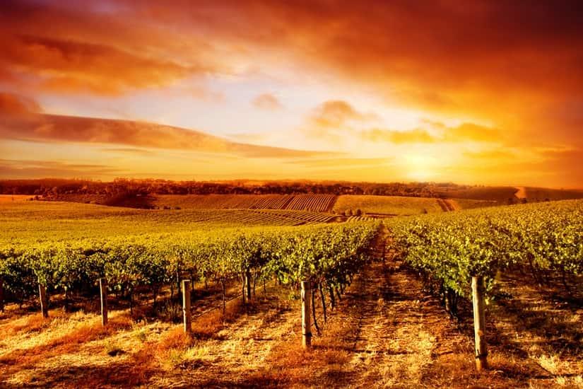 Landscape Vineyard Sunset Winery Self Adhesive Vinyl
