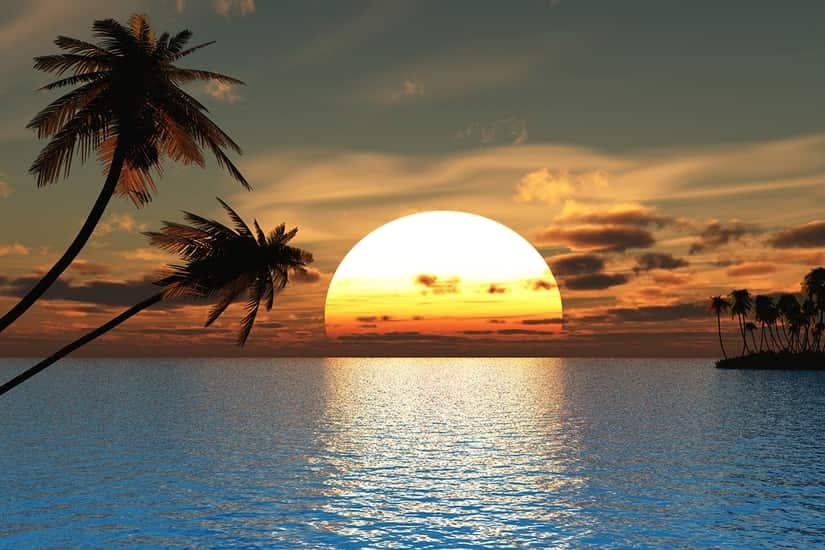 Seascape Tropical Sunset Ocean Palm Tree Self Adhesive